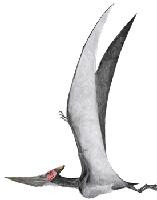 Vliegende dino - pterosauriër