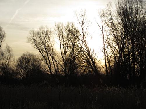 Tijdens een fijne wandeling op een vroege februariochtend...