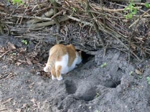 Kat in Heemtuin Sloterpark