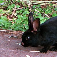 Zo zielig; het konijntje zit onder de bulten?
