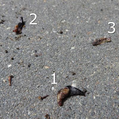 Stoffelijke overschotten van de verbrande slakjes
