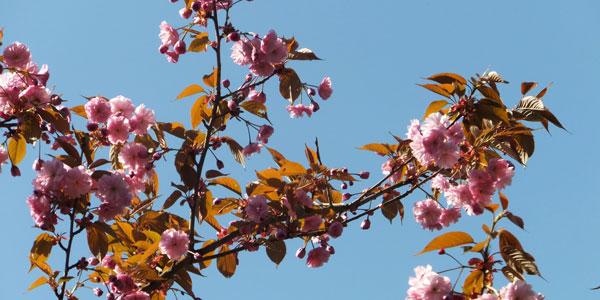 De natuur rond natuurspeeltuin de Natureluur in bloei.