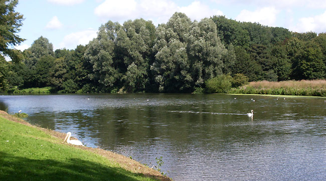 Zwaan zwemt naar pelikaan - Sloterpark/Sloterplas
