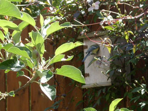 Babykamer (nestkastje) achtertuin