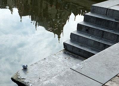 Op een terras bij Korenlei: Gentse duif neemt een verfrissend slokje.