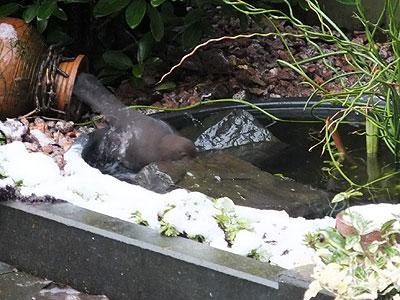Merel stiekem bij Harriët in bad