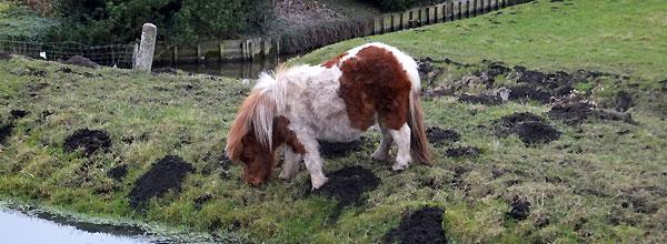 Het paardje aan de Osdorperweg, Amsterdam