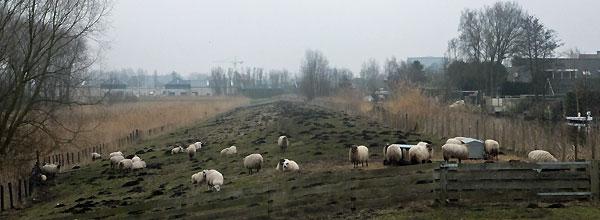 Het 'platteland' van Amsterdam Nieuw-West