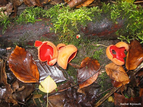 Vreemde paddenstoelen in het Sloterpark