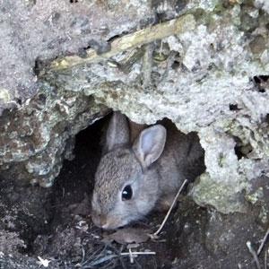 Lief jong konijntje in boomstronk