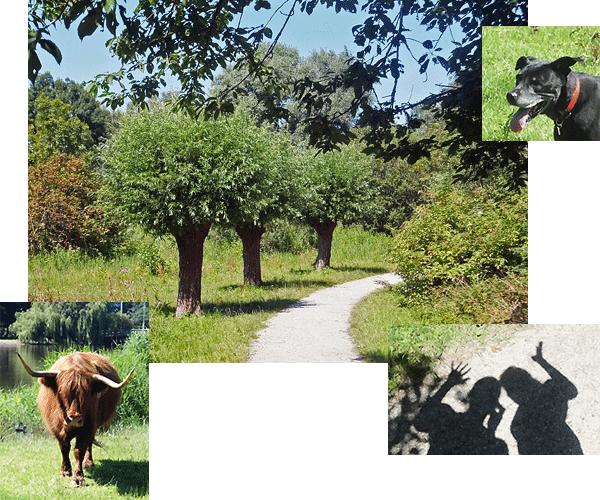Marjori & Maddy in het Vijfhoekpark in Zaandam met de Schotse Hooglanders