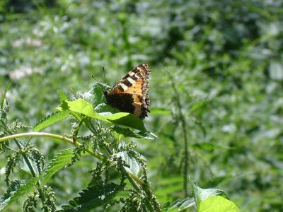 Vlinder in het park; een moment tijdens een wandeling