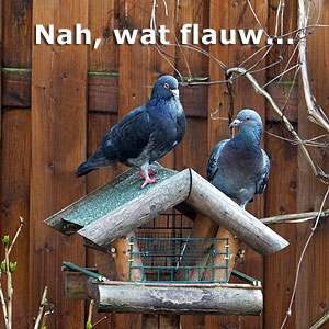 De duiven zijn niet blij met het verbouwde vogelvoederhuisje.