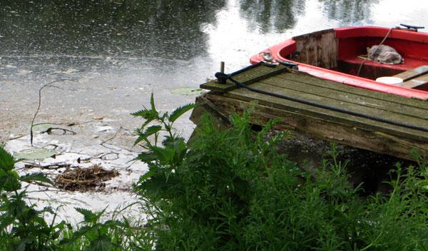 Nest van de meerkoeten naast de boot gekieperd